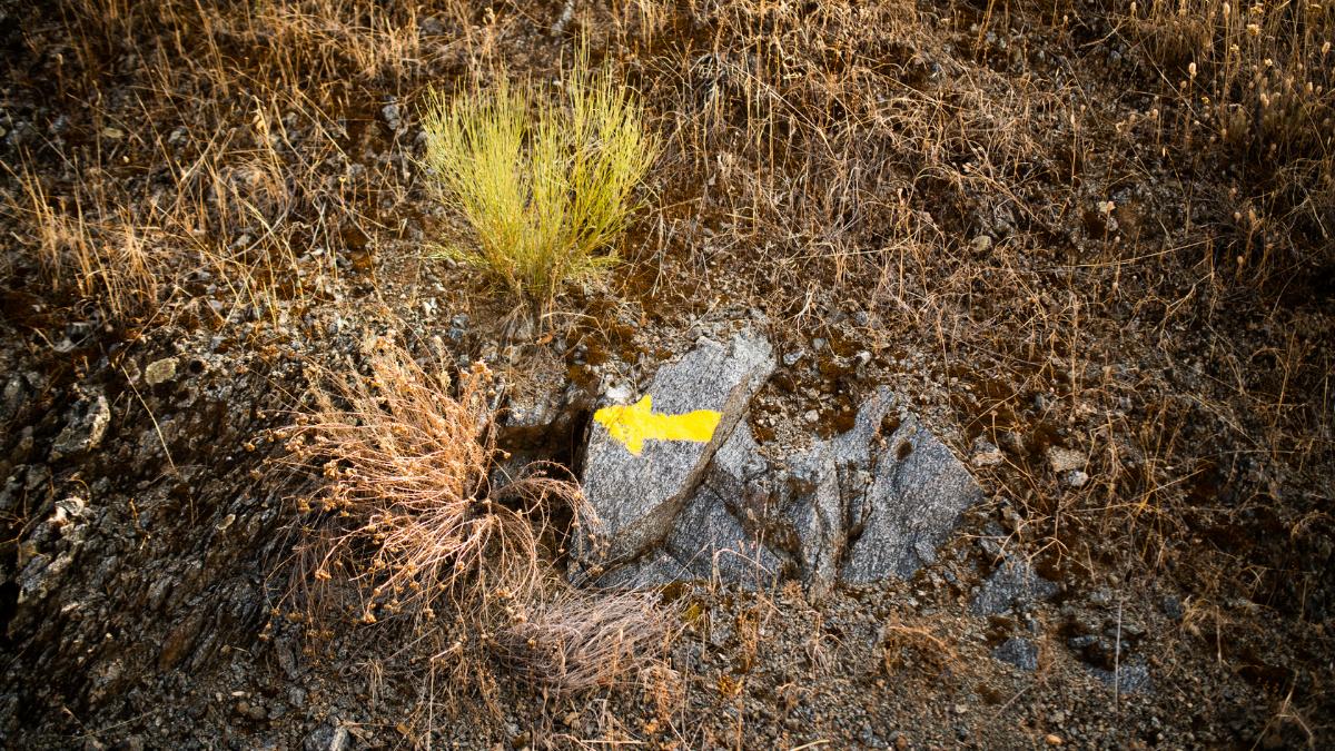flecha amarillas en el camino de santiago