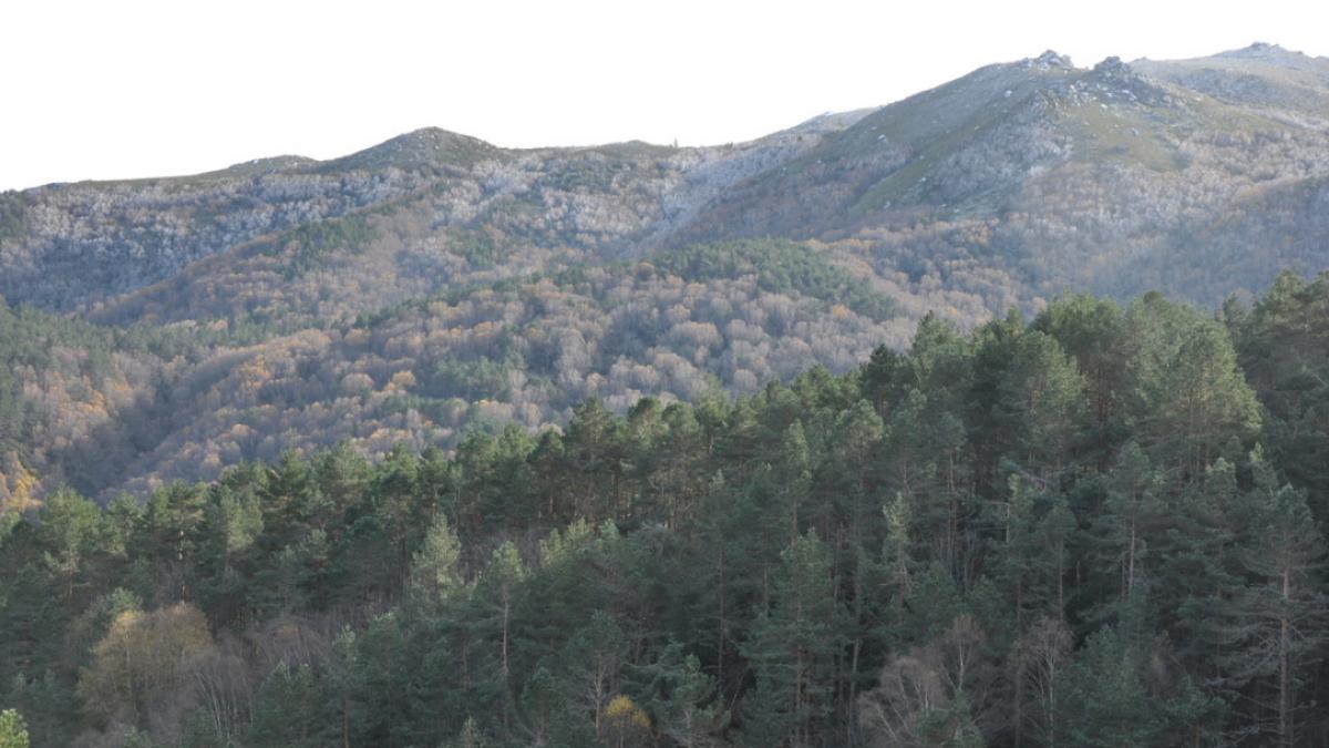 bosque bidueiral de montederramo por el camino de la plata