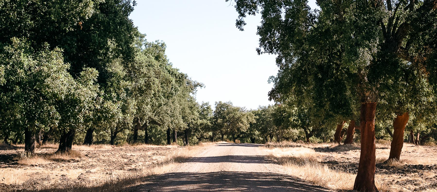 Castilblanco Camino de Santiago