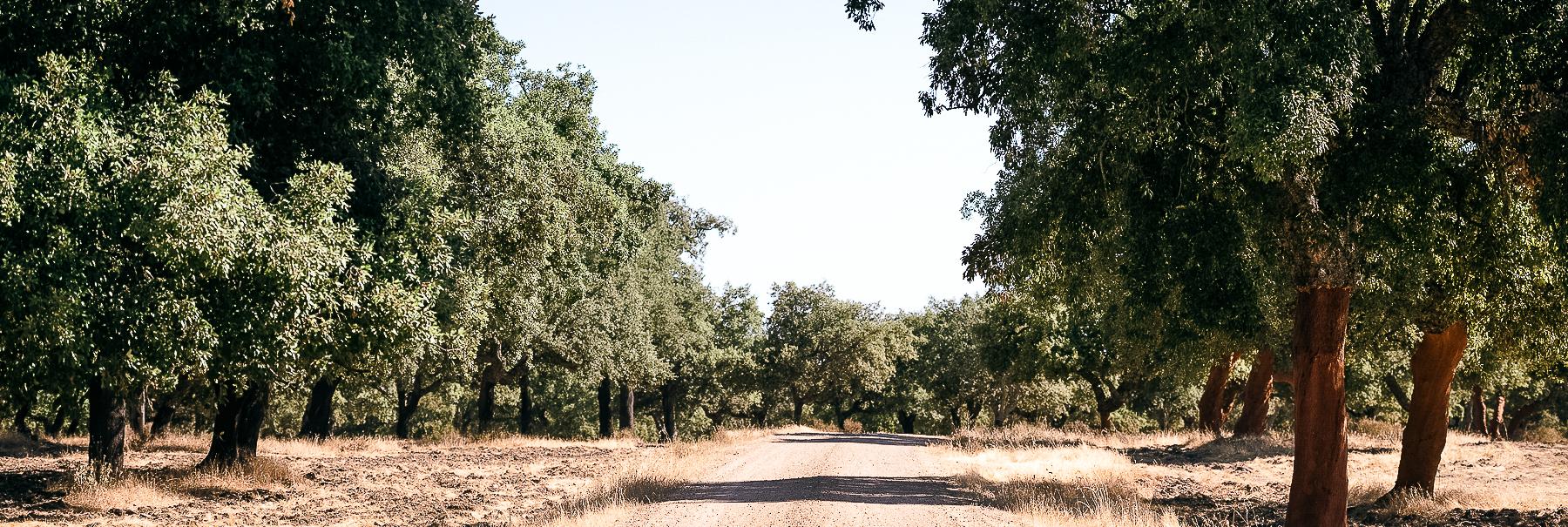 Castiblanco Camino de Santiago