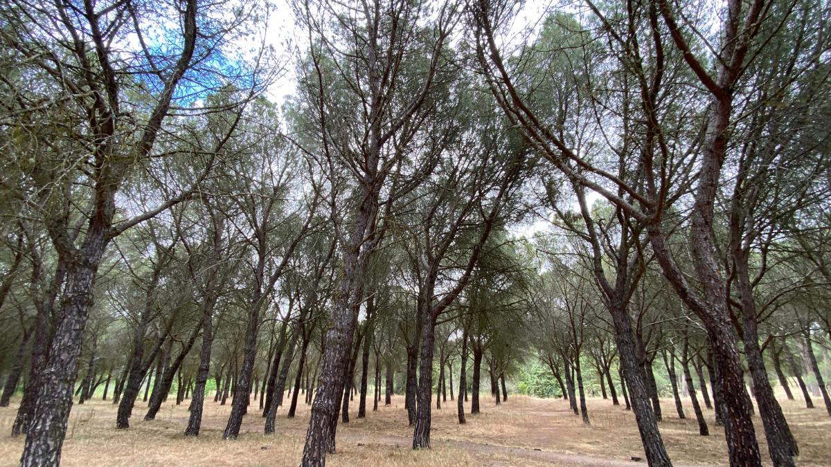 bosque de valorio zamora